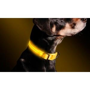 CONTAINER 25/02 Collare luminoso per cani