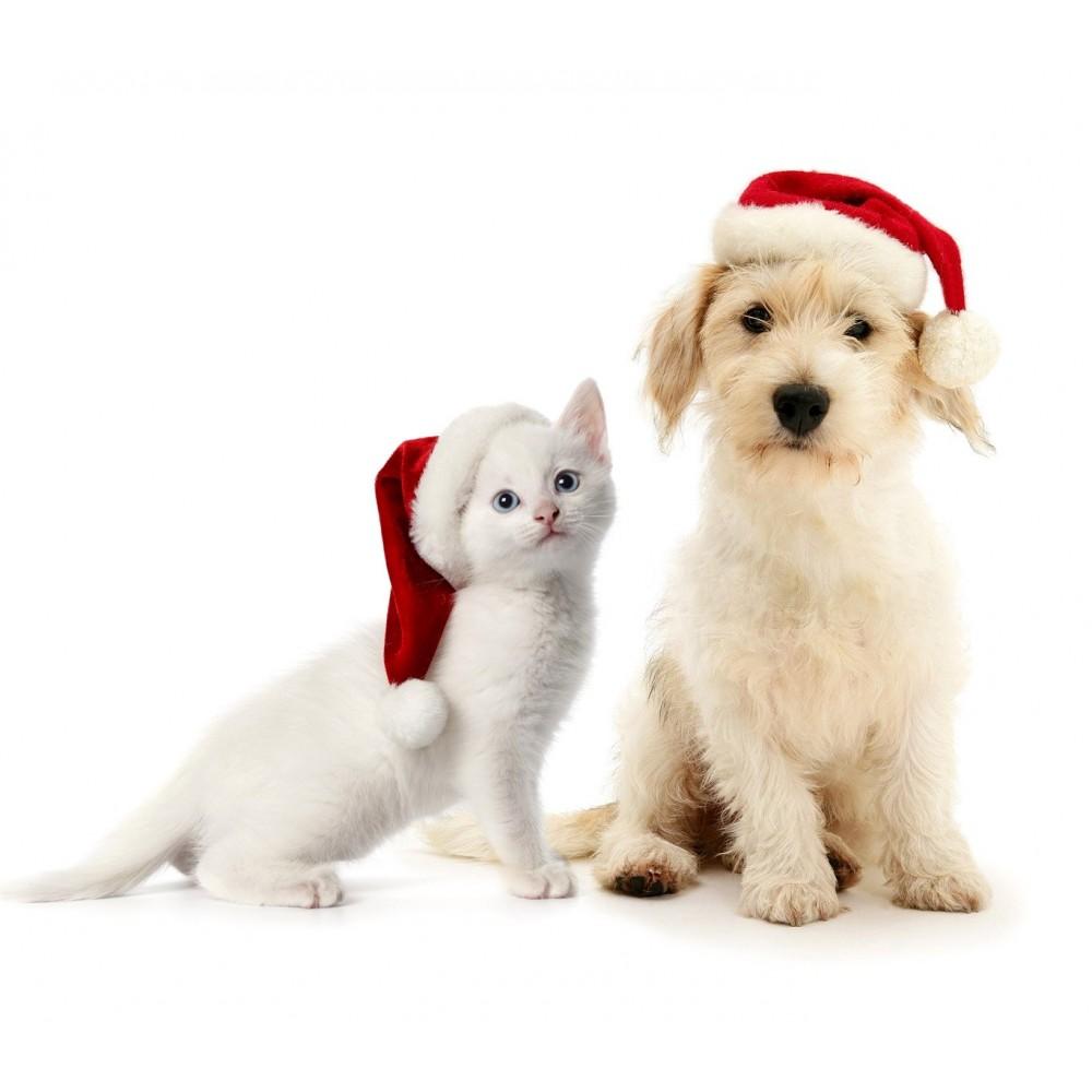 Animali Natale Immagini.790733 Cappello Da Babbo Natale Per Animali Di Taglia Piccola E Media