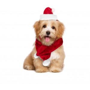 Set sciarpa e cappello BABBO NATALE 064227 ideale per cani di piccola taglia