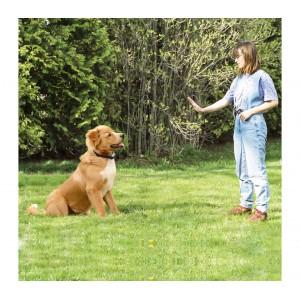 Collare per addestramento dei cani 4565 vari colori display luminoso